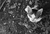 богинята котка ни гледа през котешките очи ; comments:11