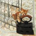 Стара ютия , коте и една пружина.... ; comments:70
