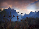 Teton Weeds... ; Comments:30