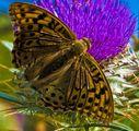Пеперуда 2 ; comments:1
