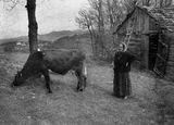 Там...в Родопите.... ; comments:62