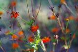 Есенни цветя ; comments:23