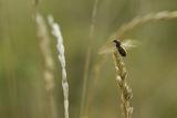 Полетът на мравката ; comments:30