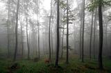 Мъгливости ; comments:24