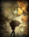First autumn rain 2 ... ; comments:70