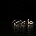 Завръщането на пеликаните ; comments:56