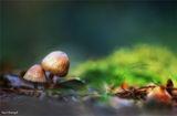 ....Хензел и Гретел в гората.... ; comments:55