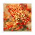 Цветовете на есента ; comments:30