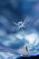 Вятърът понесе душата ми... ; comments:55