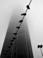 В часа на синята мъгла ; comments:81
