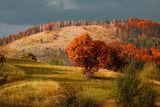 Есенно сърце ; comments:85