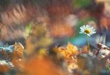 Цветовете на есента ; comments:72
