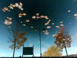 Английско есенно 2 ; comments:55