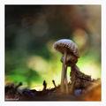 В гората ; comments:75