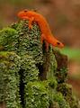Оранжев дракон ; comments:27