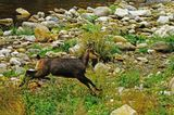 край реката... ; comments:2