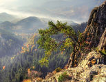 От  Родопа планина. ; comments:98