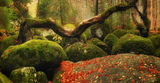 Вълшебната гора, Витоша ; comments:97