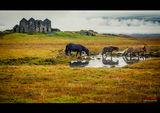 Мистичната Исландия ; comments:65