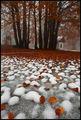 Между есента и зимата ; Comments:47