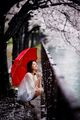 Rainy Blossoms ; comments:109