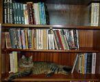Чело коте книжки... ; comments:7