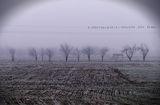 мъгла по ноти ; comments:58