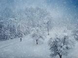 Зимна пътека... ; comments:113