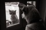 Котки на прозореца ; comments:88