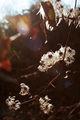 Цветовете на зимното слънцестоене (22.12.2013г.) ; Comments:7