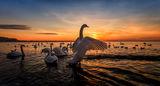 Лебедово езеро ; comments:49
