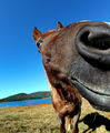 The horse smile ; comments:24