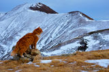 Властелина на планината ; comments:3