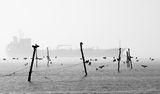 Поздрави в мъглата ; comments:19