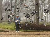 За птиците с любов ; Коментари:25