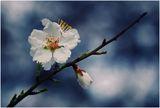 с аромат на пролет..:)) ; comments:37