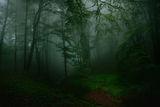 В мъгливата гора ; comments:17