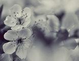 И ще сънуваме, че пак дошла е пролет ; comments:32