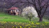 Някъде не посрещната пролет ; comments:9