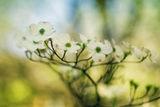 Усещане за пролет ; Comments:3