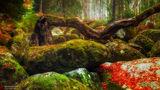 Омагьосаната гора... ; comments:22
