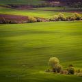 Пролетни поля ; comments:36
