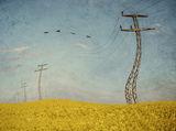 танцът на птиците и жиците ; comments:21