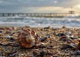 Sea treasure ; Comments:3