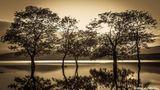 Дървета във водата ; comments:20