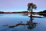 Lake Wanaka, NZ ; Comments:8