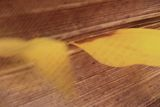 Крилописи ; comments:13