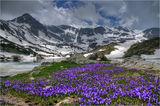 Килим от Мразовци постила пролетта на Рила... ; comments:39