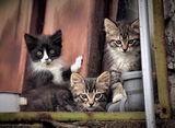 Тримата мускетари ; comments:14
