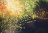 Радостта от малките неща ; comments:9